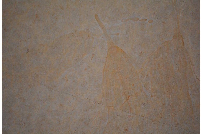 Mármol Dorado Tepeji Spazzolatto 61X61x1