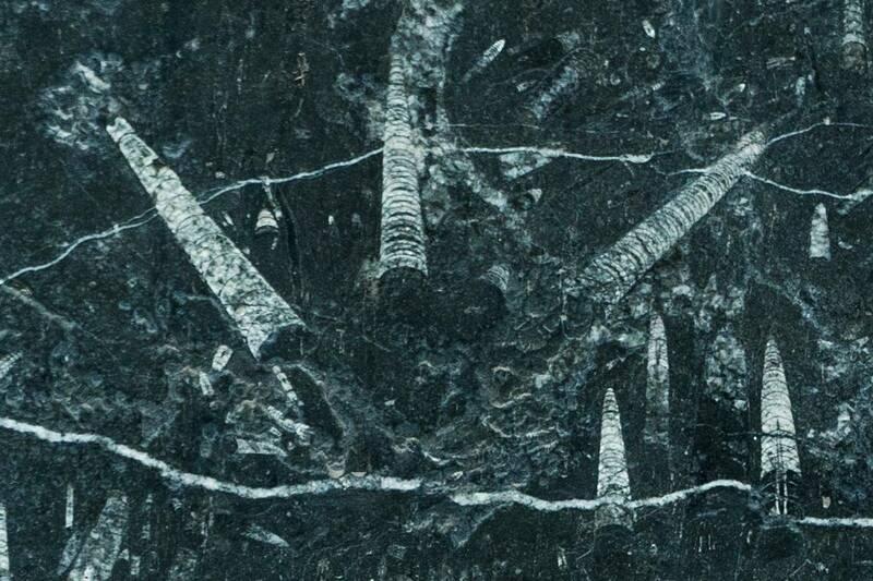 Mármol Negro Fossil Leather Finished Lámina