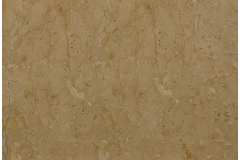 Mármol Dorado Tepeji Honed 40.6X40.6X1 6
