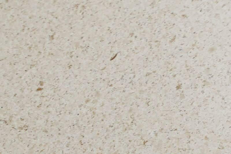 Limestone Eurogema Pulida 30.5X30.5 Prom. 10 pza por Caja