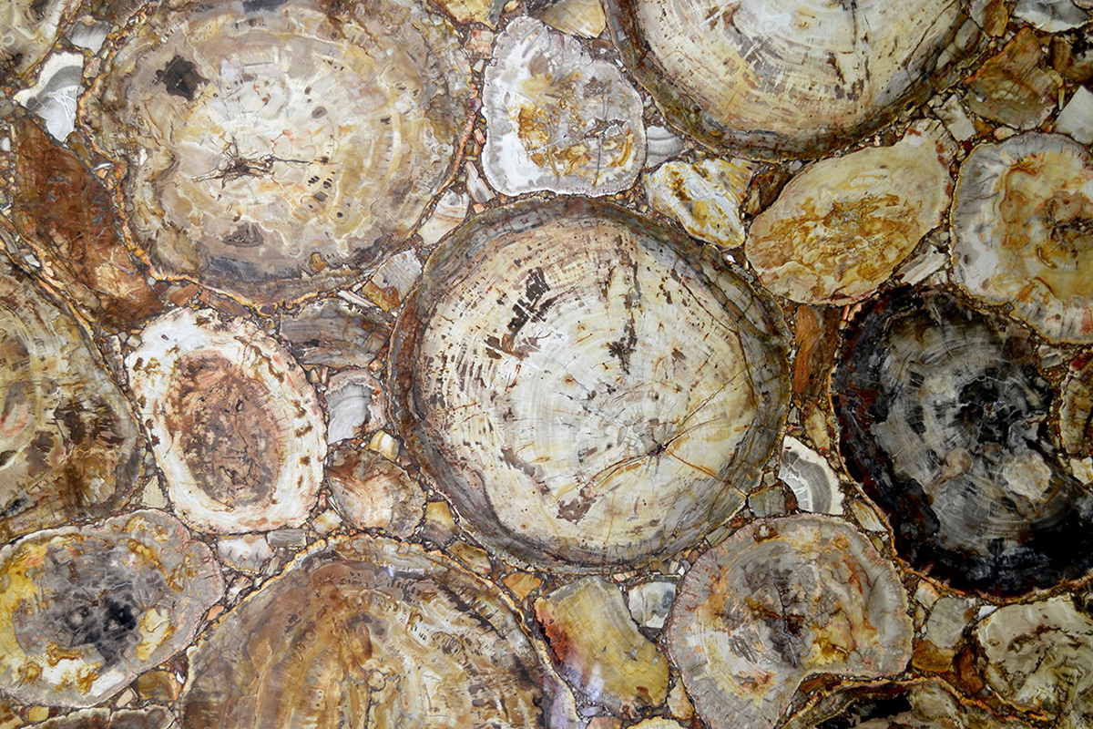 Quarzo Petrified Wood