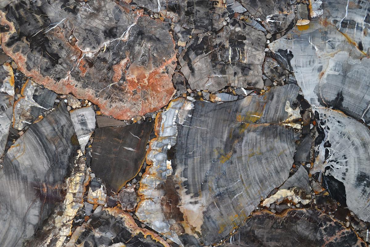 Quarzo Petrified Wood Black